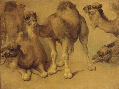 Dromadaires-Pieter Boel-Giclee Print