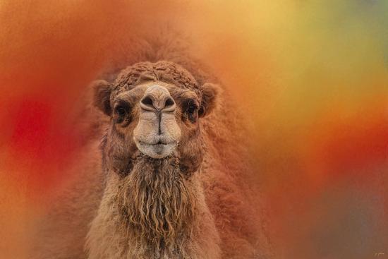 Dromedary Camel-Jai Johnson-Giclee Print