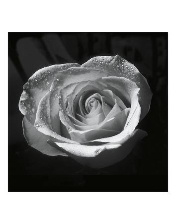 https://imgc.artprintimages.com/img/print/droplets-ii_u-l-f8ch050.jpg?artPerspective=n