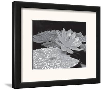 Droplets on Water Lilly-Dennis Frates-Framed Art Print