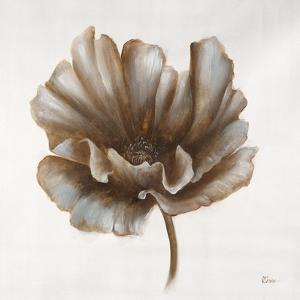 Sepia Poppy III by Drotar Drotar