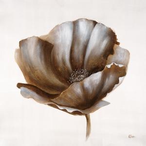 Sepia Poppy IV by Drotar Drotar