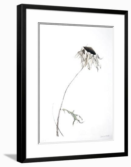 Dry Daisy-Paul Jansen-Limited Edition Framed Print