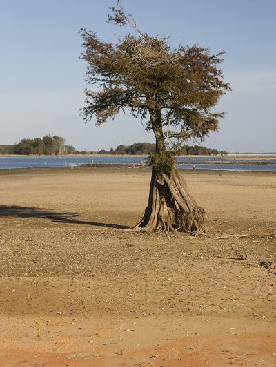 Dry Lake Bed of Lake Marion in the Santee Cooper Lake System During the Fall Drought of 2009-Marc Epstein-Photographic Print