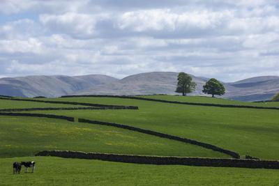 https://imgc.artprintimages.com/img/print/dry-stone-walls-eden-valley-cumbria-england-united-kingdom-europe_u-l-q12qz7j0.jpg?p=0