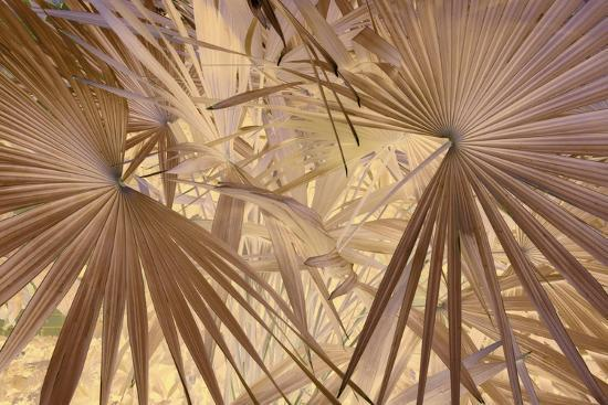 _DSC0009-Tom Kelly-Giclee Print