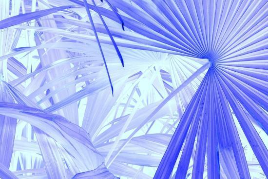_DSC0010-Tom Kelly-Giclee Print