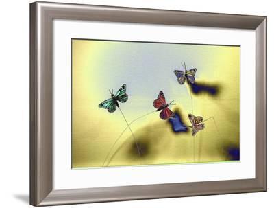 DSC1235-Tom Kelly-Framed Photographic Print