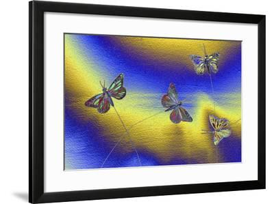 DSC1237-Tom Kelly-Framed Photographic Print
