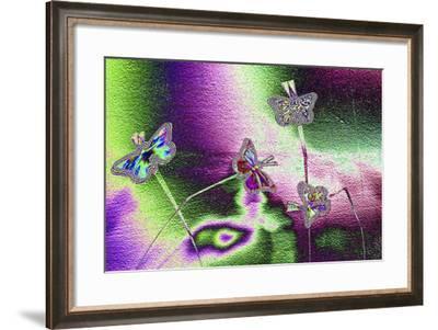 DSC1242-Tom Kelly-Framed Photographic Print