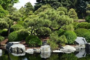 Botanic Garden by duallogic