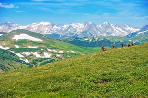 Colorado Panorama with Elks by duallogic