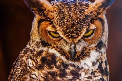 Great Horned Own by duallogic