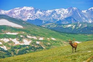 Lonely Elk Alpine Meadow by duallogic