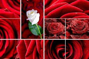 Lovely Roses Mosaic by duallogic