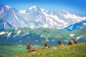 North American Elks by duallogic