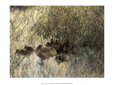 Duck Family, 1903-Bruno Liljefors-Art Print