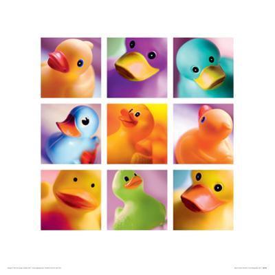 Duck Family Portraits