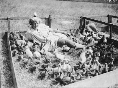 Duck Farm--Photographic Print