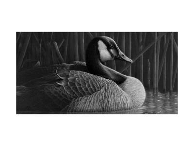 Duck--Art Print