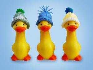 Ducklings in Woolly Hats