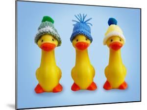 Ducklings in Woolly Hats