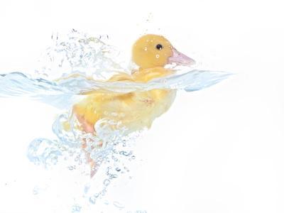 https://imgc.artprintimages.com/img/print/ducks-001_u-l-q10pgc20.jpg?artPerspective=n