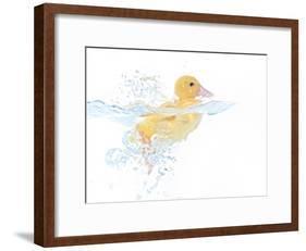 Ducks 001-Andrea Mascitti-Framed Photographic Print