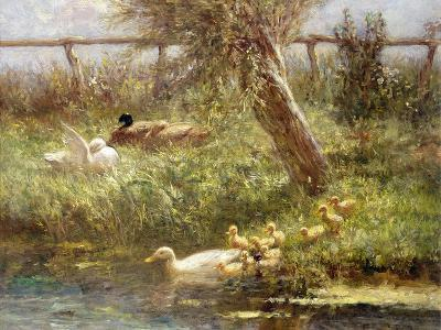 Ducks and Ducklings-David Adolph Constant Artz-Giclee Print