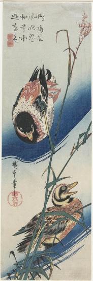 Ducks and Reeds, 1834-1839-Utagawa Hiroshige-Giclee Print