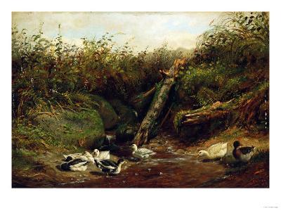Ducks at a Brook, 1872-Arthur Fitzwilliam Tait-Giclee Print