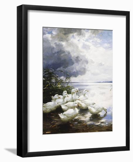 Ducks at the Lake's Edge-Alexander Koester-Framed Giclee Print