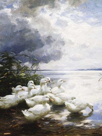 https://imgc.artprintimages.com/img/print/ducks-at-the-lake-s-edge_u-l-pm5jy10.jpg?p=0