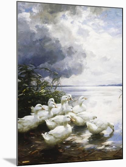 Ducks at the Lake's Edge-Alexander Koester-Mounted Giclee Print
