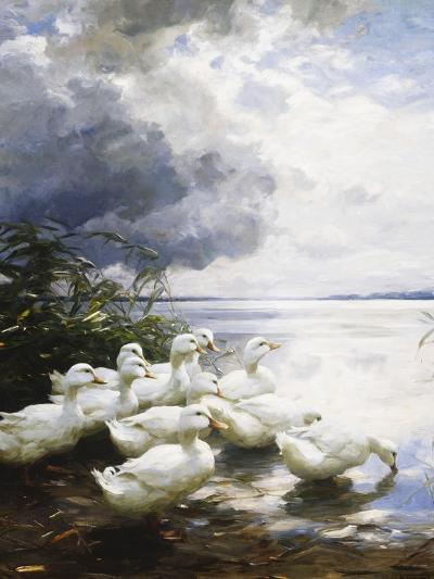 Ducks at the Lake's Edge-Alexander Koester-Giclee Print