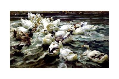 https://imgc.artprintimages.com/img/print/ducks-gathering_u-l-prczsq0.jpg?p=0