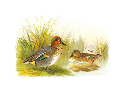 Ducks II-Henry Jones-Premium Giclee Print