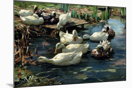 Ducks in a Pool-Alexander Koester-Mounted Giclee Print