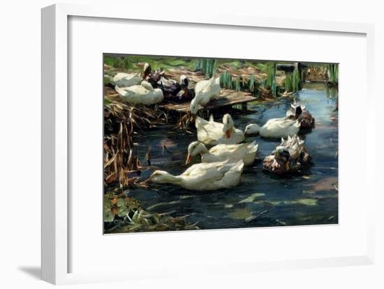 Ducks in a Pool-Alexander Koester-Framed Giclee Print