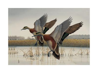 Ducks in Flight--Art Print