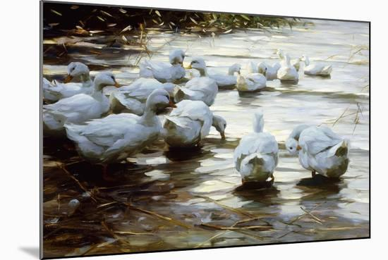 Ducks in Shallow Water Reed; Enten in Flachem Schilfwasser-Alexander Koester-Mounted Giclee Print