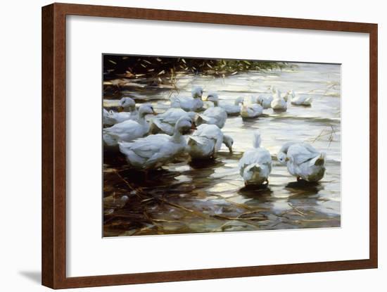 Ducks in Shallow Water Reed; Enten in Flachem Schilfwasser-Alexander Koester-Framed Giclee Print