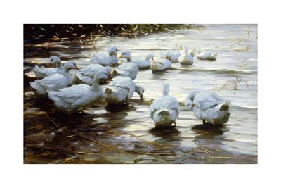 https://imgc.artprintimages.com/img/print/ducks-in-shallow-water-reed-enten-in-flachem-schilfwasser_u-l-pk8b700.jpg?p=0
