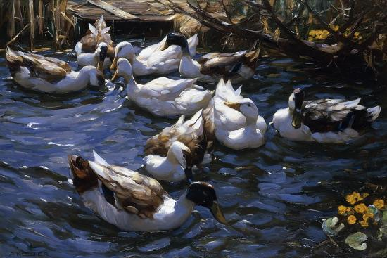 Ducks in the Reeds under the Boughs-Alexander Koester-Giclee Print