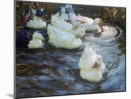 Ducks on a Pond, C1884-1932-Alexander Koester-Mounted Giclee Print