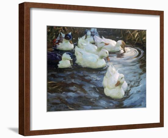 Ducks on a Pond, C1884-1932-Alexander Koester-Framed Giclee Print