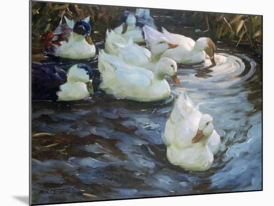 Ducks on a Pond, C1884-1932-Alexander Koester-Mounted Giclee Print