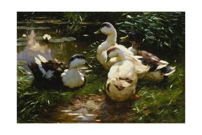 https://imgc.artprintimages.com/img/print/ducks-on-a-pond-with-waterlilies_u-l-pt49ms0.jpg?p=0