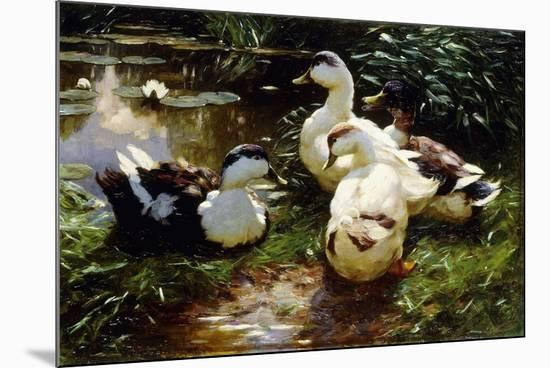 Ducks on a Riverbank-Alexander Koester-Mounted Giclee Print