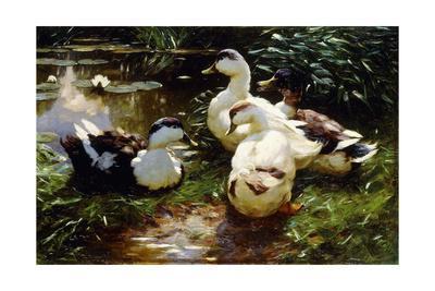 https://imgc.artprintimages.com/img/print/ducks-on-a-riverbank_u-l-pk8fv90.jpg?p=0